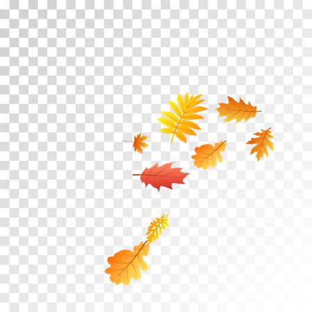 Oak, maple, wild ash rowan leaves vector, autumn foliage on transparent background. Red orange gold rowan dry autumn leaves. Floral tree foliage october seasonal background. 向量圖像