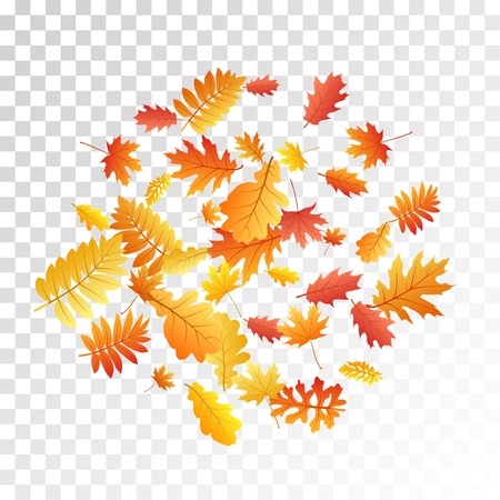 Oak, maple, wild ash rowan leaves vector, autumn foliage on transparent background. Red orange gold oak dry autumn leaves. Falling tree foliage vector october season specific background.