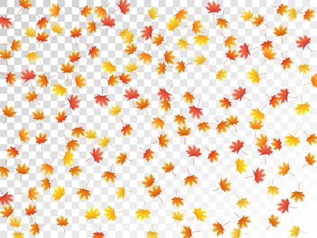 Maple leaves vector, autumn foliage on transparent background. Canadian symbol maple red yellow gold dry autumn leaves. Realistic tree foliage vector fall season specific background. Ilustracja