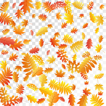 Oak, maple, wild ash rowan leaves vector, autumn foliage on transparent background. Red orange gold sorb dry autumn leaves. Biological tree foliage november seasonal background pattern. Ilustracja