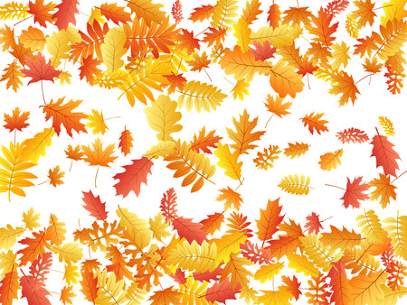 Oak, maple, wild ash rowan leaves vector, autumn foliage on white background. Red orange yellow oak dry autumn leaves. Floral tree foliage october background pattern. Stockfoto - 122571055