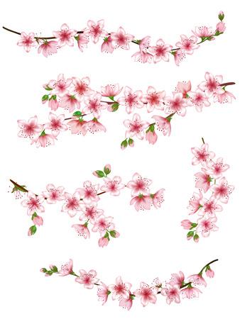 Japanese cherry branches set vector illustration.