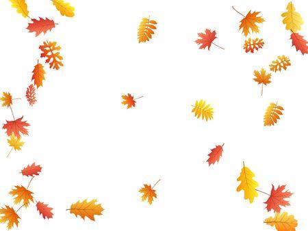 Oak, maple, wild ash rowan leaves vector, autumn foliage on white background. Red orange yellow sorbus dry autumn leaves. Abstract tree foliage october season specific background.