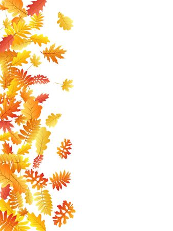 Oak, maple, wild ash rowan leaves vector, autumn foliage on white background. Red orange gold ash and oak autumn leaves. Beautiful tree foliage october background pattern.  イラスト・ベクター素材