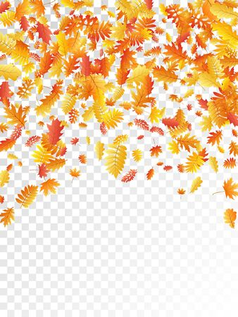 Oak, maple, wild ash rowan leaves vector, autumn foliage on transparent background. Red orange gold wild ash dry autumn leaves. Fancy tree foliage fall seasonal background pattern.
