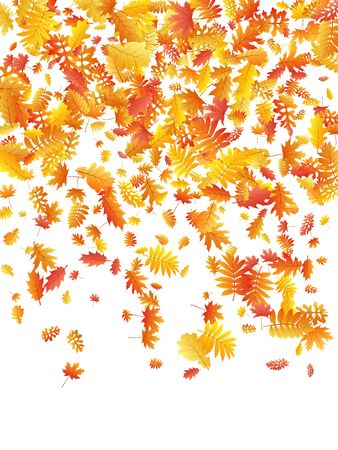 Oak, maple, wild ash rowan leaves vector, autumn foliage on white background. Red gold yellow sorbus dry autumn leaves. Natural tree foliage vector october season specific background. 向量圖像