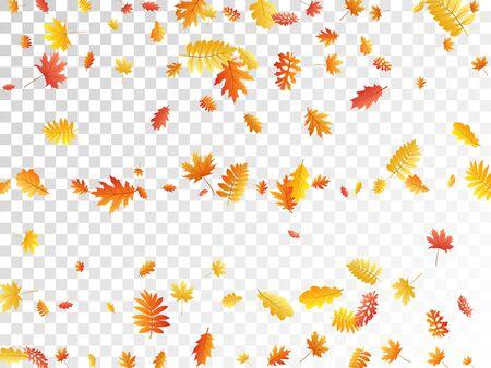 Oak, maple, wild ash rowan leaves vector, autumn foliage on transparent background. Red gold yellow sorbus dry autumn leaves. Chic tree foliage vector november seasonal background.