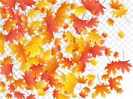 Foglie di acero vettoriale, fogliame autunnale su sfondo trasparente. Simbolo canadese acero rosso giallo oro foglie secche autunnali. Grafica di sfondo di ottobre fogliame vivido dell'albero.