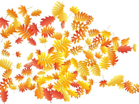 Oak, maple, wild ash rowan leaves vector, autumn foliage on white background. Red gold yellow sorbus dry autumn leaves. Forest tree foliage vector september season specific background.