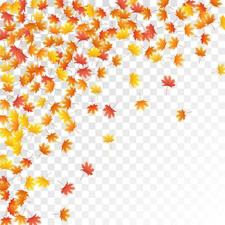 Maple leaves vector, autumn foliage on transparent background. Canadian symbol maple red orange yellow dry autumn leaves. Biological tree foliage vector november season specific background.