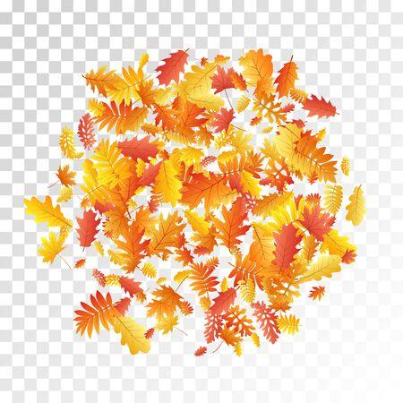 Oak, maple, wild ash rowan leaves vector, autumn foliage on transparent background. Red gold yellow ash and oak autumn leaves. Abstract tree foliage october seasonal background.  イラスト・ベクター素材