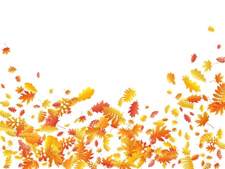 Oak, maple, wild ash rowan leaves vector, autumn foliage on white background. Red gold yellow ash and oak autumn leaves. Isolated tree foliage vector fall season specific background.