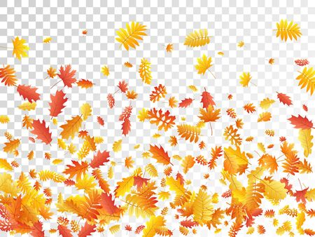 Oak, maple, wild ash rowan leaves vector, autumn foliage on transparent background. Red orange gold oak dry autumn leaves. Romantic tree foliage vector fall season specific background.