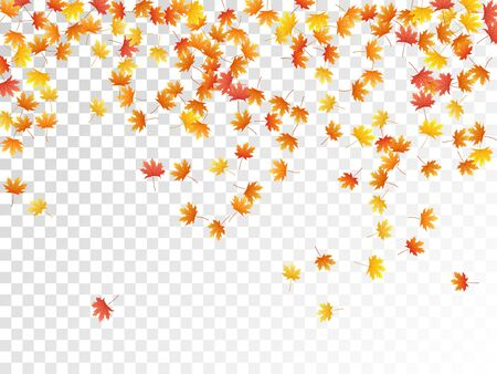 Maple leaves vector, autumn foliage on transparent background. Canadian symbol maple red yellow gold dry autumn leaves. Biological tree foliage november seasonal background pattern.