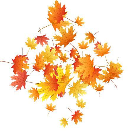 Ahornblätter Vektorhintergrund, Herbstlaub auf weißem Grafikdesign. Kanadisches Symbol Ahorn rot gelbes Gold trockenes Herbstlaub. Ausgefallener Baum Laub Vektor Oktober Saison spezifischer Hintergrund.
