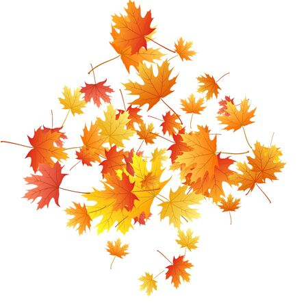 Maple leaves vector background, autumn foliage on white graphic design. Canadian symbol maple red yellow gold dry autumn leaves. Fancy tree foliage vector october season specific background.