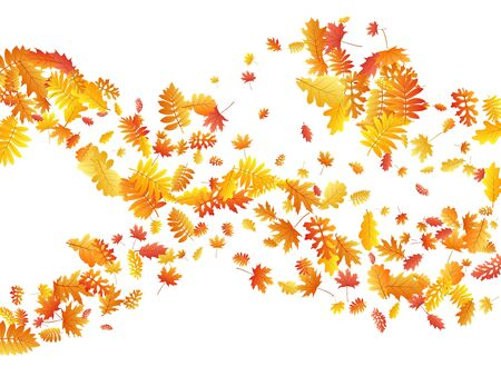 Oak, maple, wild ash rowan leaves vector, autumn foliage on white background. Red orange gold rowan dry autumn leaves. Snazzy tree foliage fall season specific background pattern. Illustration
