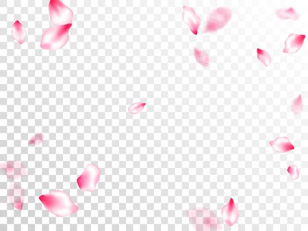 Spring blossom isolated petals flying on transparent background. Japanese cherry flower parts falling vector pattern. Pastel pink blossom petals floral design. Fresh blowing backdrop.