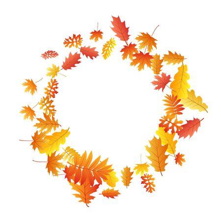 Vector de hojas de roble, arce, fresno salvaje serbal, follaje otoñal sobre fondo blanco. Hojas de otoño secas de fresno salvaje amarillo oro rojo. Patrón de fondo estacional de otoño de follaje de árbol floral. Ilustración de vector