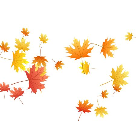 Maple leaves vector background, autumn foliage on white graphic design. Canadian symbol maple red orange gold dry autumn leaves. Biological tree foliage vector november seasonal background. Ilustrace