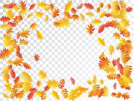 Oak, maple, wild ash rowan leaves vector, autumn foliage on transparent background. Red gold yellow rowan and oak autumn leaves. Natural tree foliage fall season specific background. Иллюстрация