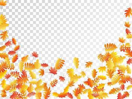 Oak, maple, wild ash rowan leaves vector, autumn foliage on transparent background. Red gold yellow rowan dry autumn leaves. Isolated tree foliage september background graphics.