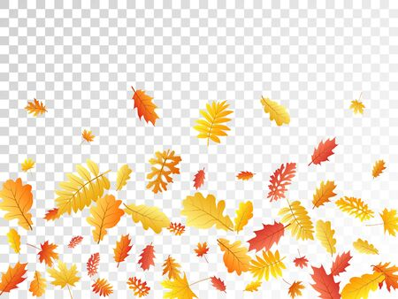 Oak, maple, wild ash rowan leaves vector, autumn foliage on transparent background. Red orange yellow wild ash dry autumn leaves. Romantic tree foliage fall season specific background graphics. 일러스트