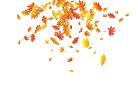 Oak, maple, wild ash rowan leaves vector, autumn foliage on white background. Red gold yellow sorbus dry autumn leaves. Botanical tree foliage vector september seasonal background.
