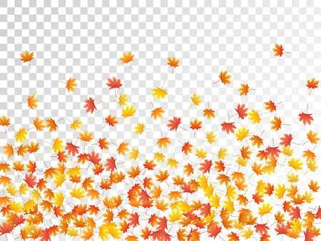 Maple leaves vector, autumn foliage on transparent background. Canadian symbol maple red yellow gold dry autumn leaves. Cool tree foliage november seasonal background.