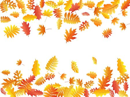 Oak, maple, wild ash rowan leaves vector, autumn foliage on white background. Red orange yellow rowan dry autumn leaves. Natural tree foliage fall season specific background.