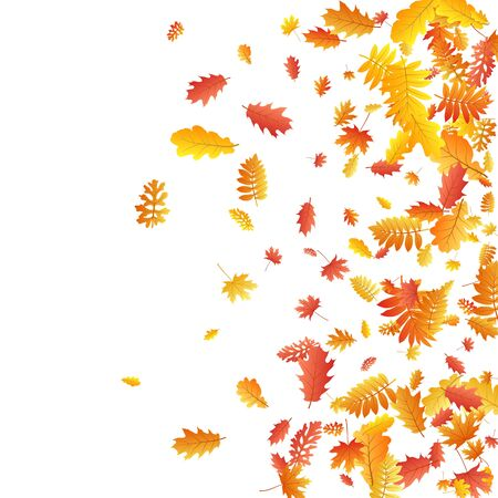Oak, maple, wild ash rowan leaves vector, autumn foliage on white background. Red orange yellow rowan dry autumn leaves. Fancy tree foliage vector october seasonal background.