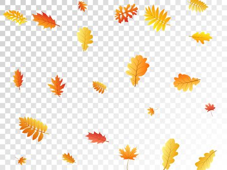 Oak, maple, wild ash rowan leaves vector, autumn foliage on transparent background. Red orange gold rowan and oak autumn leaves. Stylish tree foliage fall season specific background. Illustration