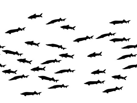 Black school of fish swimming vector illustration. Ocean or sea background. Shoal of fishes isolated on white. Marine Zander summer design.