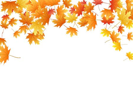 Maple leaves vector background, autumn foliage on white graphic design. Canadian symbol maple red yellow gold dry autumn leaves. Romantic tree foliage vector october season specific background.