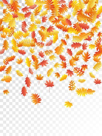 Oak, maple, wild ash rowan leaves vector, autumn foliage on transparent background. Red gold yellow rowan dry autumn leaves. Bright tree foliage vector fall season specific background.