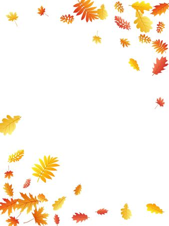 Oak, maple, wild ash rowan leaves vector, autumn foliage on white background. Red orange gold sorbus dry autumn leaves. Romantic tree foliage vector november season specific background.