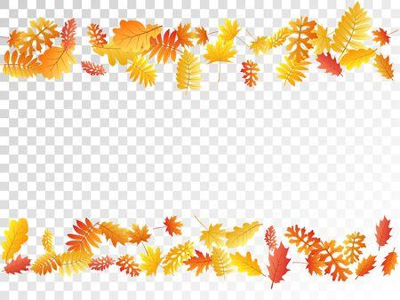 Oak, maple, wild ash rowan leaves vector, autumn foliage on transparent background. Red orange gold oak dry autumn leaves. Biological tree foliage october seasonal background.
