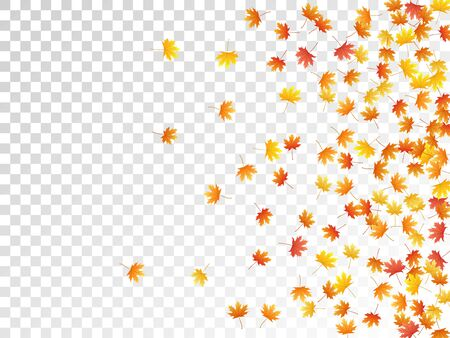 Maple leaves vector, autumn foliage on transparent background. Canadian symbol maple red yellow gold dry autumn leaves. Garden tree foliage october seasonal background.