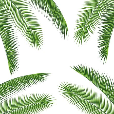 Fropical palm leaves frame botanical vector illustration. Exotic nature card or banner with frame for text isolated on white background. Jungle green leaf floral pattern. Tropical palm leaves card.