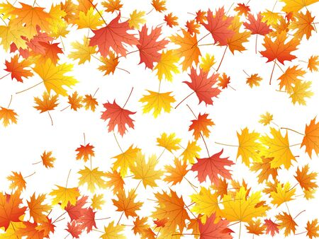 Maple leaves vector background, autumn foliage on white graphic design. Canadian symbol maple red orange gold dry autumn leaves. Romantic tree foliage november season specific background.