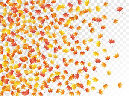 Maple leaves vector, autumn foliage on transparent background. Canadian symbol maple red yellow gold dry autumn leaves. Biological tree foliage october seasonal background.