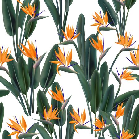 Bird of paradise tropical flower vector seamless pattern. Jungle exotic tropical plant fabric design. South African plant tropical blossom of crane flower, strelitzia. Floral wallpaper.