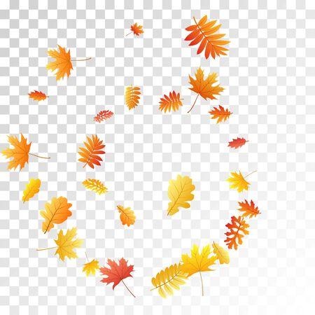 Oak, maple, wild ash rowan leaves vector, autumn foliage on transparent background. Red gold yellow sorbus dry autumn leaves. Realistic tree foliage vector november seasonal background. Ilustrace
