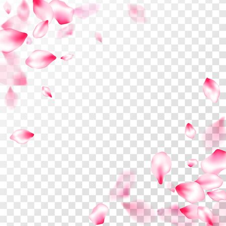 Pink cherry blossom petals isolated on transparent background. Birthday card backdrop. Spring or summer light flower petals illustration. Flying sakura flower parts spring wedding vector. Ilustrace