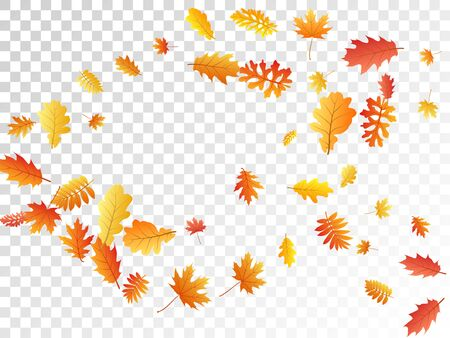 Oak, maple, wild ash rowan leaves vector, autumn foliage on transparent background. Red gold yellow sorb dry autumn leaves. Biological tree foliage fall seasonal background pattern. Ilustrace