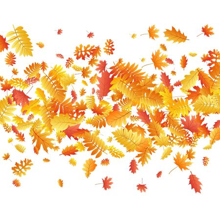 Oak, maple, wild ash rowan leaves vector, autumn foliage on white background. Red orange gold rowan dry autumn leaves. Biological tree foliage fall seasonal background pattern.