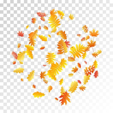 Oak, maple, wild ash rowan leaves vector, autumn foliage on transparent background. Red gold yellow oak dry autumn leaves. Snazzy tree foliage vector november season specific background. Vettoriali