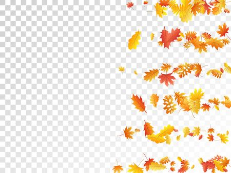 Oak, maple, wild ash rowan leaves vector, autumn foliage on transparent background. Red orange yellow sorbus dry autumn leaves. Abstract tree foliage vector october season specific background.