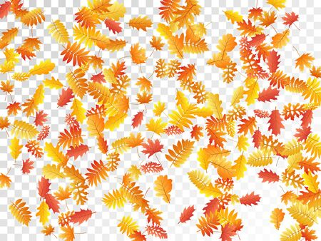 Oak, maple, wild ash rowan leaves vector, autumn foliage on transparent background. Red orange yellow rowan dry autumn leaves. Falling tree foliage september background graphics. Vettoriali