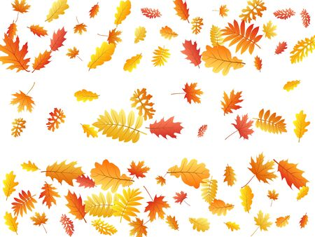 Oak, maple, wild ash rowan leaves vector, autumn foliage on white background. Red orange gold ash and oak autumn leaves. Realistic tree foliage vector october season specific background.